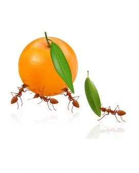 Ameisen bewegen sich orange