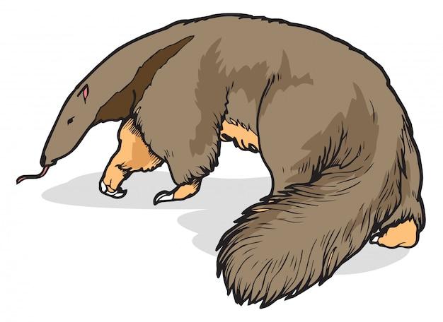 Ameisenbär vektor-illustration