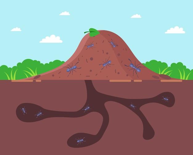 Ameisenhaufen draußen und unter der erde. ein haus für ameisen.