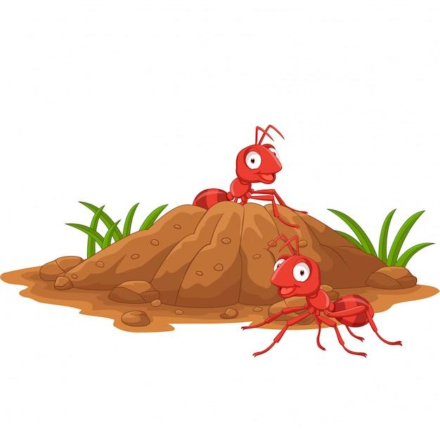 Ameisenhaufen im waldland