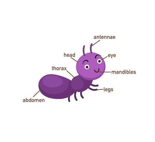 Ameisenvokabular teil von body.vector