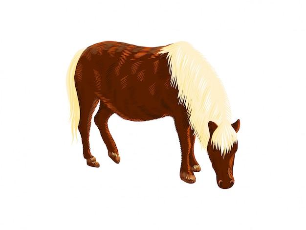 Amerikanisches miniaturpferd