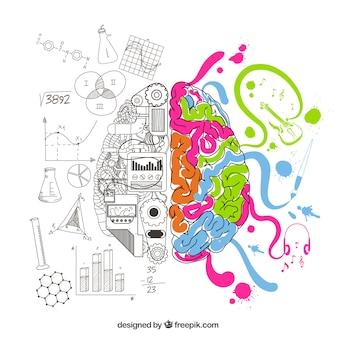 Analytische und kreative gehirn