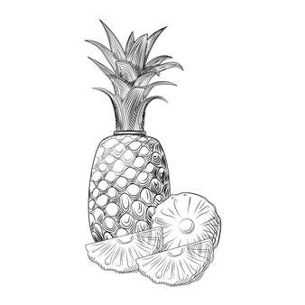 Ananasfrucht-skizze. ananasscheiben. exotische tropische früchte.