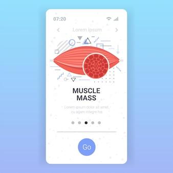 Anatomie der menschlichen muskeln gesundheitswesen muskelmasse konzept smartphone bildschirm mobile app kopie raum