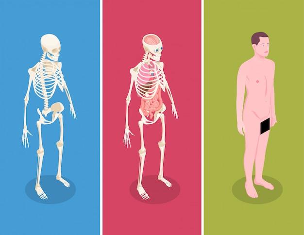 Anatomie isometrische fahnen gesetzt mit männlichem körper und zwei menschlichen skeletten auf buntem hintergrund 3d lokalisiert