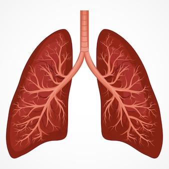 Anatomiediagramm der menschlichen lunge. grafik zu atemwegserkrankungen bei krankheiten.