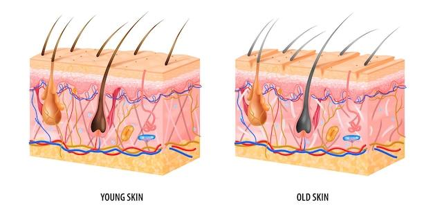 Anatomische struktur der jungen und alten haut realistisch isoliert