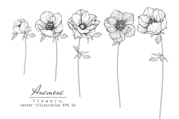 Anemone blatt- und blumenzeichnung