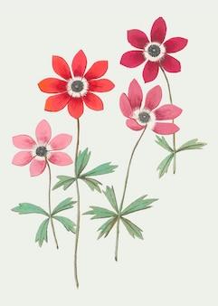 Anemone im vintage-stil