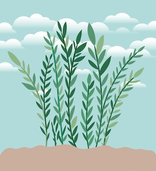 Anlage des gartens gepflanzt