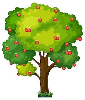 Apfelbaum isoliert auf weißem hintergrund