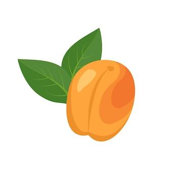 Aprikosenfruchtikone helle reife frucht mit blattnahrung für ein gesundes diätdessert