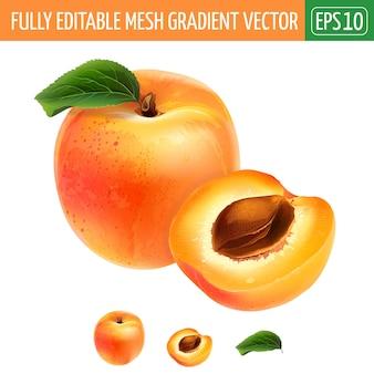 Aprikosenillustration auf weiß