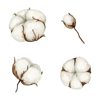 Aquarell baumwolle blumenzweige gesetzt. botanische hand gezeichnete öko-produktillustration. baumwollblumenknospenkugeln im weinlesestil. pflanzenball naturikone