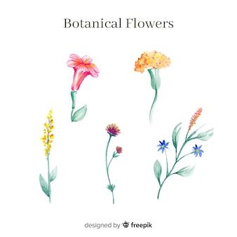 Aquarell botanische blumensammlung