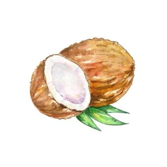 Aquarell braune kokosnuss mit einer hälfte