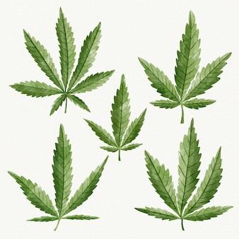 Aquarell cannabisblätter