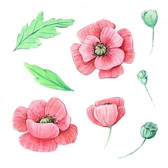 Aquarell eingestellt mit mohnblumenblumen und -blättern