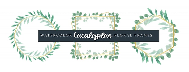 Aquarell-eukalyptus-blumenrahmen