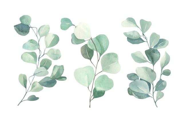 Aquarell-eukalyptus-sammlung. Premium Vektoren