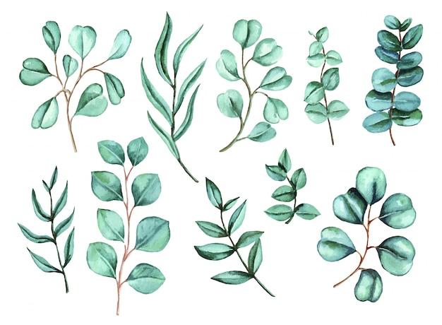 Aquarell-eukalyptus-set. handgemalte baby-, samen- und silberdollar-eukalyptuszweige lokalisiert auf weißem hintergrund.