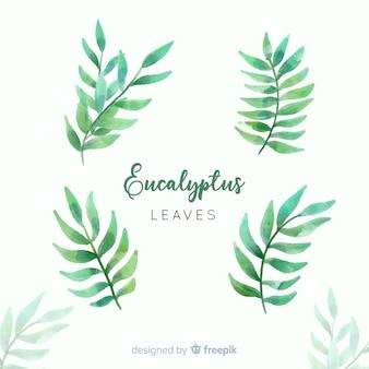 Aquarell eukalyptusblätter eingestellt