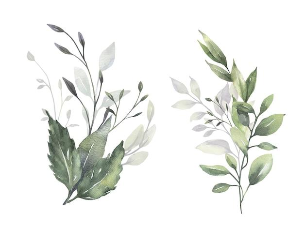 Aquarell eukalyptussträuße