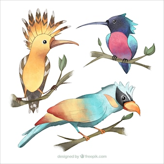 Aquarell exotische vögel sammlung