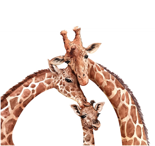 Aquarell-familiengiraffe. giraffe küssen baby. giraffenfarbe.