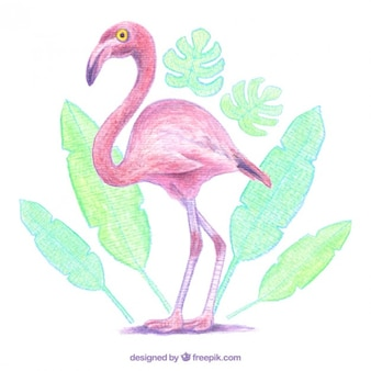 Aquarell flamingo