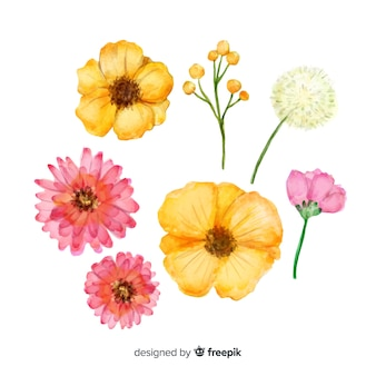 Aquarell frühlingsblumenkollektion