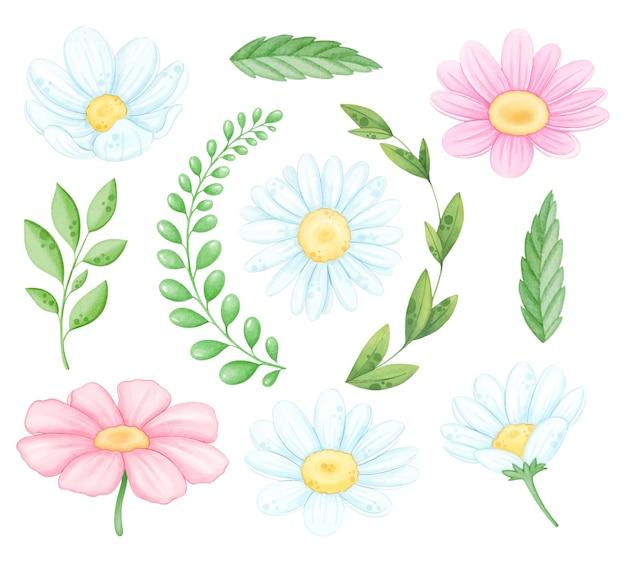 Aquarell gänseblümchen blume und zweige gesetzt