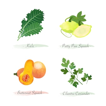 Aquarell gesunde bio-pflanzengemüse zutat grünkohl pastetchen kürbis butternusskürbis koriander koriander