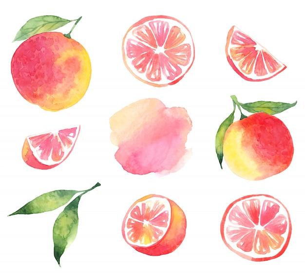 Aquarell grapefruit. satz grapefruit aus den elementen, scheiben, ringen und aquarellflecken
