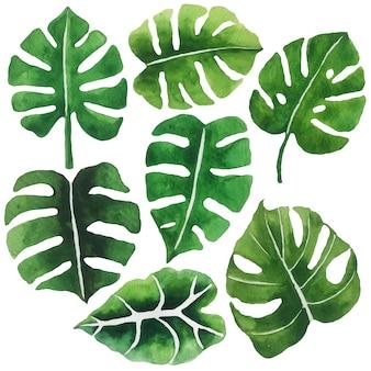 Aquarell grüne blätter.