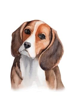 Aquarell handgemalte beagle-hundeporträtillustration