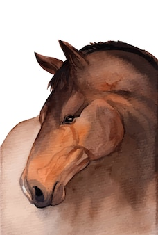 Aquarell handgemalte pferdeillustration