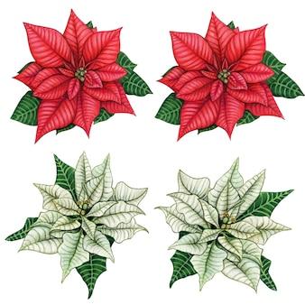 Aquarell handgezeichnete elegante realistische weihnachtssterndekorationen