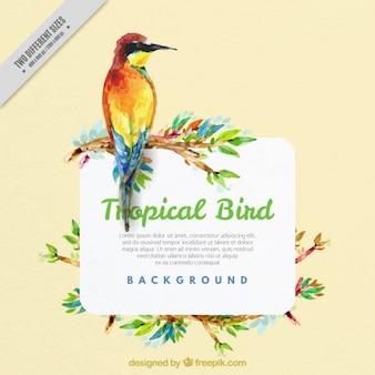 Aquarell hintergrund exotischer vogel