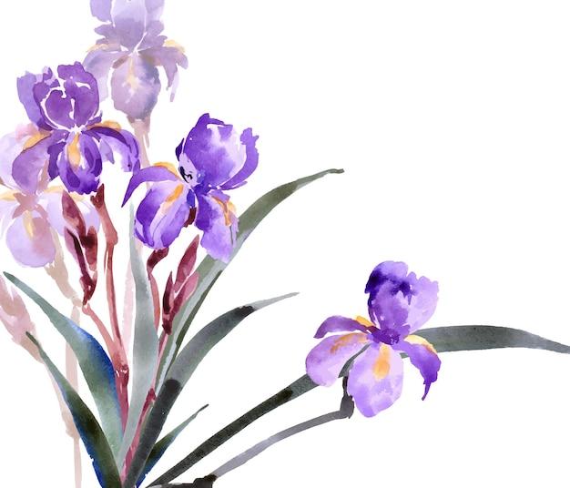 Aquarell iris hand gezeichnete vektorillustration frühlings- oder sommerdesign