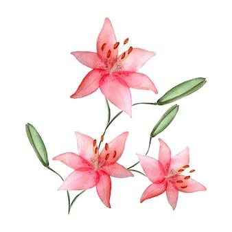 Aquarell lilien, isoliert, handgezeichnete illustration von blumen, können für einladungen und grußkarten verwendet werden.