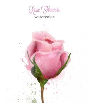 Aquarell rosa rose