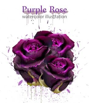 Aquarell rosen