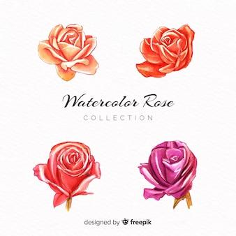Aquarell-rosensammlung
