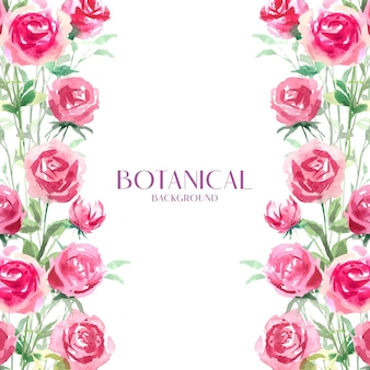 Aquarell rote rose botanisch, rosa und weiß