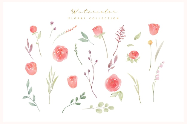 Aquarell rote rosenblumensammlung Premium Vektoren