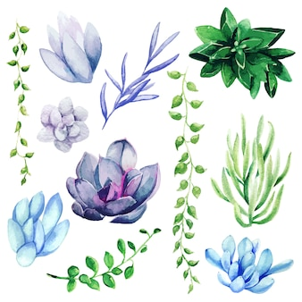 Aquarell-satz der hellen hand gezeichneten sukkulenten, hand gezeichnet