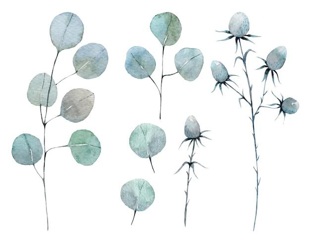 Aquarell satz von eukalyptus und dornen