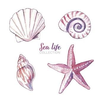 Aquarell sea life